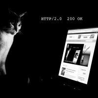 HTTP Cat